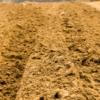 Pasjonatka gruntów i studia doktoranckie